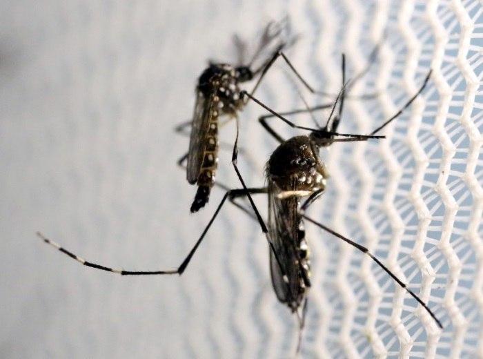 Zika torna mais rígido critério de doação de sangue