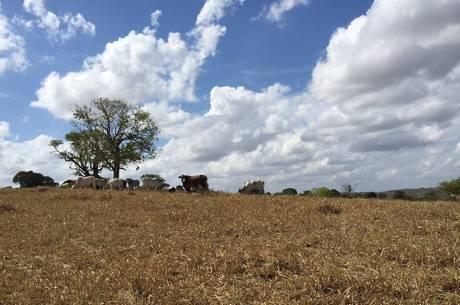 Com uma das maiores estiagens dos últimos anos, os sertanistas usam tecnologias sociais para continuar na caatinga
