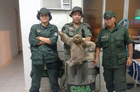 Animal mede 90 cm e pesa cerca de 8 kg