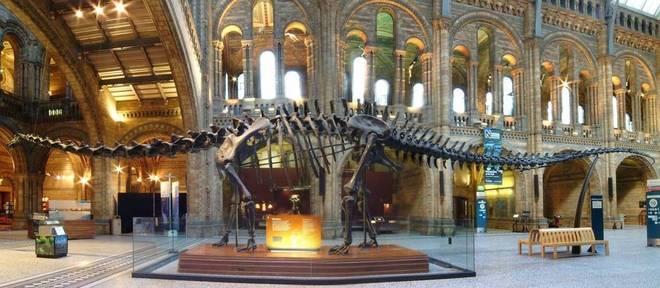 Réplica de esqueleto de um diplodoco fará uma turnê por museus do Reino Unido