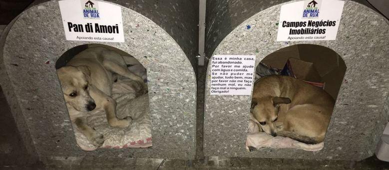 Animais que não encontraram um lar tem espaço para se proteger do frio em Lages, em Santa Catarina