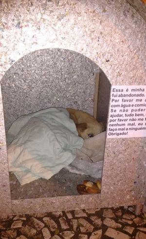 Animais ficam dentro das casinhas