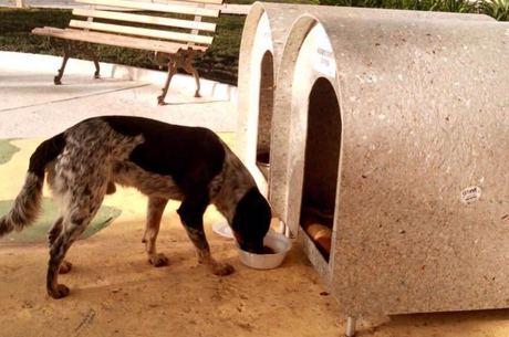 Animais recebem alimento e água de moradores da região