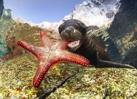 Maravilhas do fundo do mar são reveladas em concurso de fotos