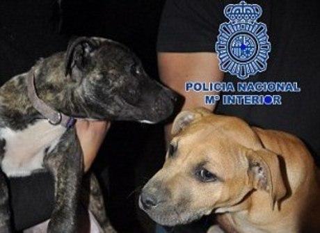 Polícia resgata centenas de cães confinados para lutas em rinhas