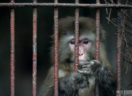 Zoológico com só um funcionário choca a China. Confira as fotos