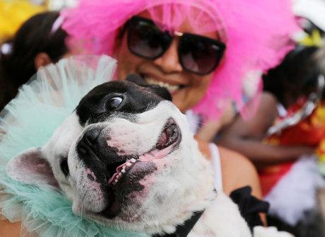 Blocão leva cachorros fantasiados às ruas do Rio de Janeiro