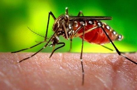 Casos de dengue caíram 90% em relação ao registrado no mesmo período de 2016