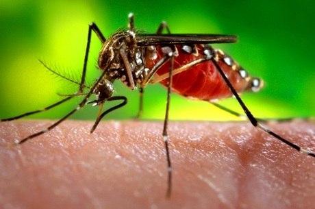 Febre de chikungunya e dengue: transmitidas pelo mesmo vetor