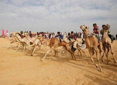 Corrida de camelos agita cidade no deserto do Egito. Confira imagens!