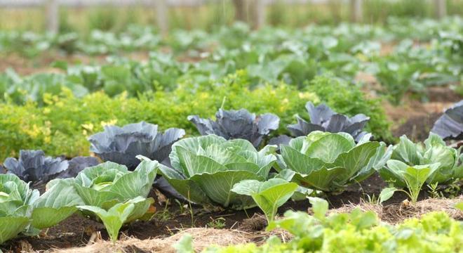 Consumo de hortaliças aumentou cerca de 40% durante a pandemia, diz o estudo
