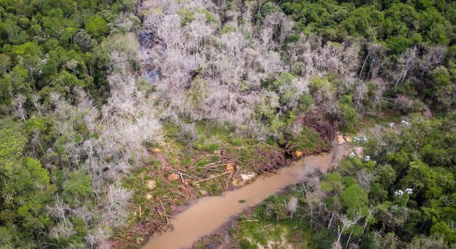 Árvores mortas pela lama de Fundão