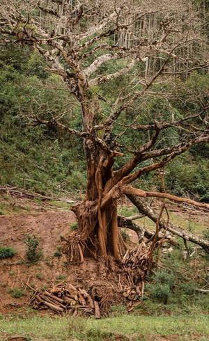 Árvores mortas não serão retiradas, funcionando como poleiro de aves