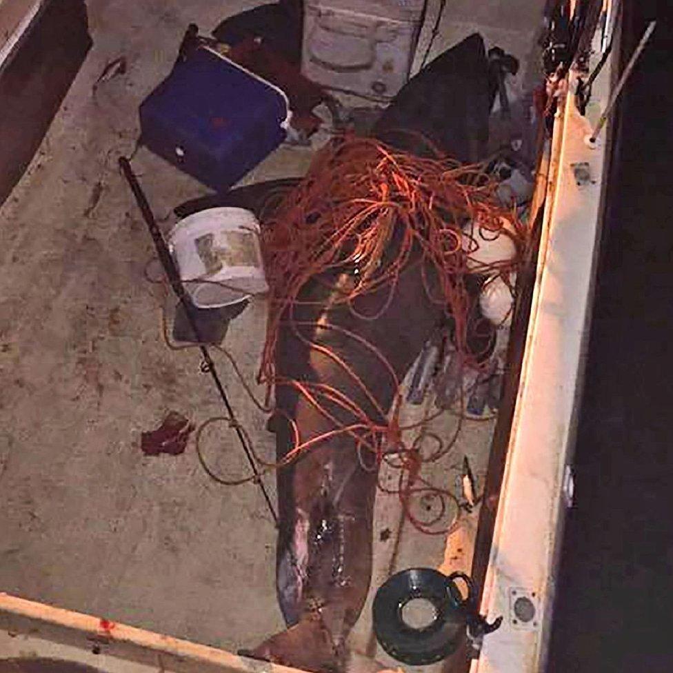 Tubarão aterra em barco e deixa pescador em pânico