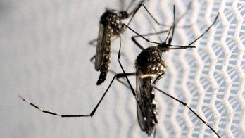 __Vírus da zika pode ser usado para eliminar câncer cerebral__ (Reuters)