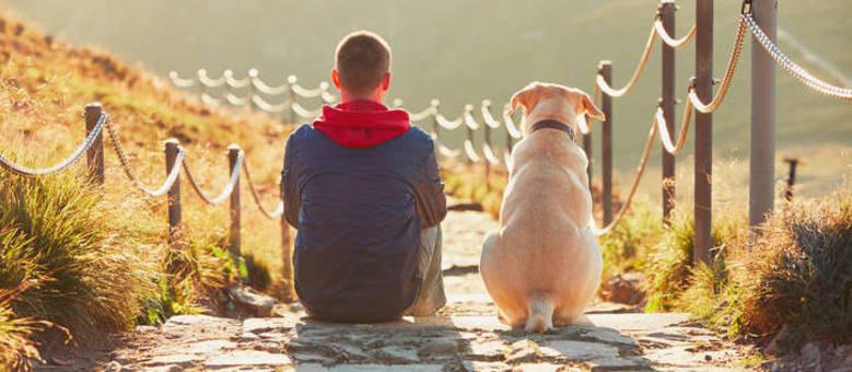 Planeje passeios e hotéis que tratem seu cão como filho