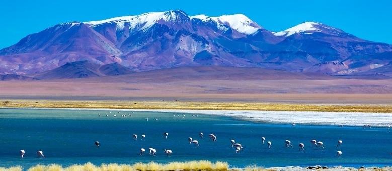 Flamingos estão no Salar do Atacama, cujo passeio termina com um piquenique