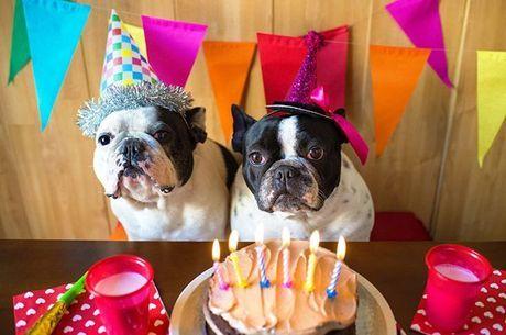 festa cachorro