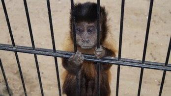 Fuja de sete crueldades no turismo que exploram animais (Thinkstock)