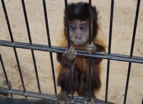 Fuja das crueldades que te fazem colaborar com a exploração animal