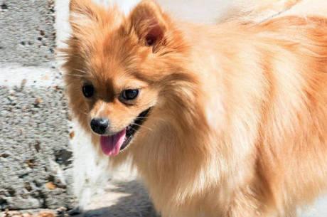 Cães de raça costumam ser adotados com rapidez