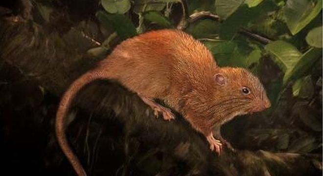 Uma representação da nova espécie descoberta nas Ilhas Salomão