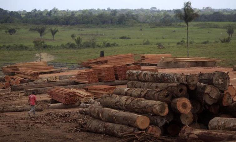 Operação Anhanga Arara apura extração ilegal de madeiras nobres no Pará