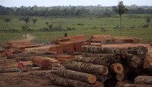 Alerta dos EUA sobre exportação ilegal de madeira foi ignorado