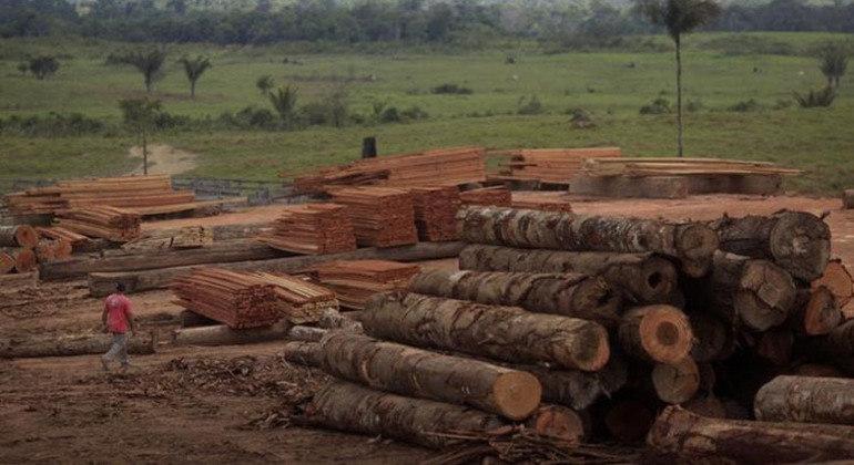 Importação da madeira que sai das florestas do Brasil está concentrada em 20 países