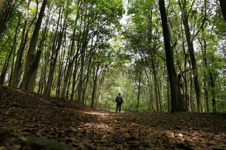 Horto Florestal: interdição anunciada pelas autoridades de saúde