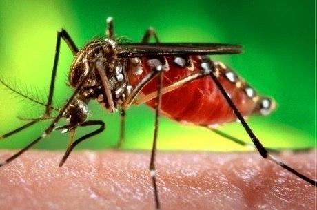Dia D De Combate Ao Aedes Aegypti Acontece Na Sexta Em São Paulo
