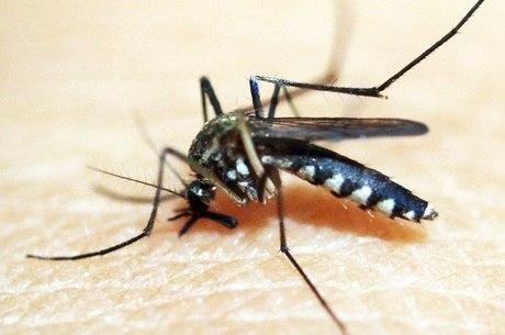 Último ciclo da doença havia ocorrido em meados de 2008, 2009, segundo especialista