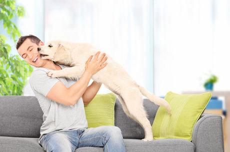cão beijando o dono