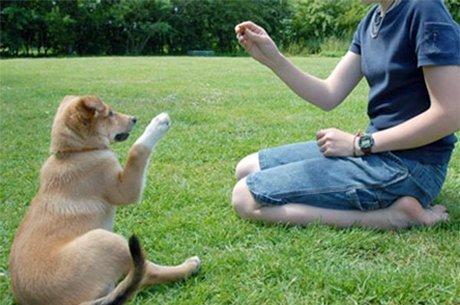 filhote sendo adestrado