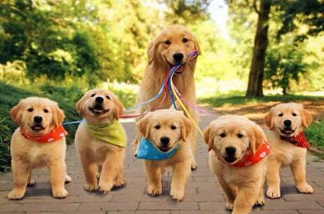 cão adulto com filhotes