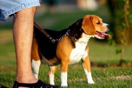 cão passeio