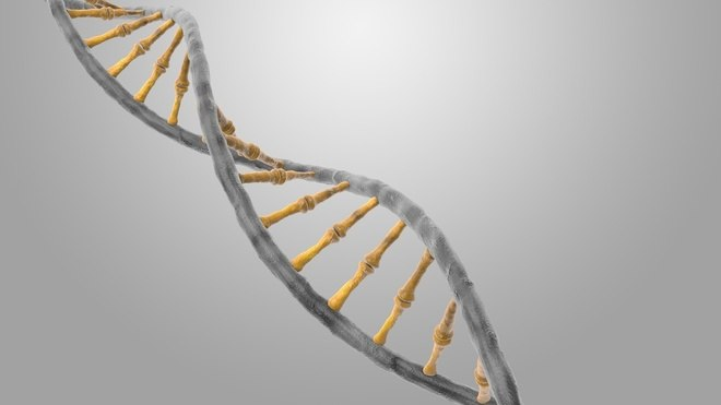 """Outro exame que ajuda no diagnóstico de doenças raras é o sequenciamento completo do Exoma, um exame de sangue capaz de identificar doenças genéticas causadas por mutações na sequência do DNA. De acordo com o médico João Gabriel Daher,coordenador de genética do Laboratório Lafe, com o teste é possível avaliar se pacientes que apresentam atraso de desenvolvimento ou alguma malformação sem um diagnóstico definitivo possuem alguma doença genética. 'Isso evita uma desgastante sucessão de consultas em busca de um diagnóstico"""", explica o médico. Veja a seguir quais são as doenças raras como maior incidência no Brasil"""