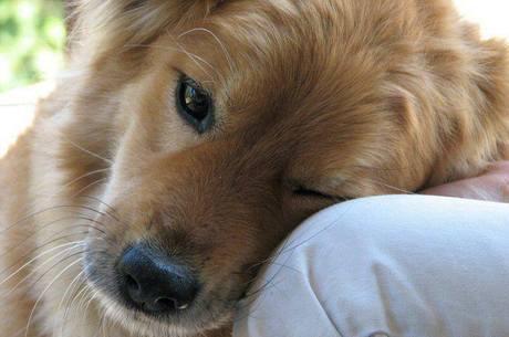 cão no colo do dono