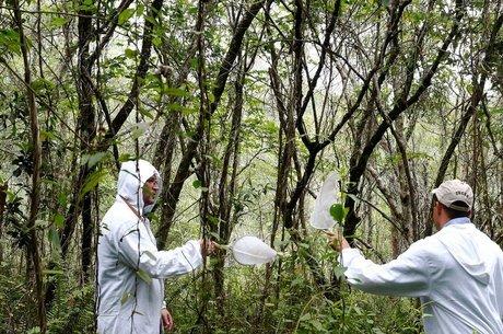 Surto de febre amarela silvestre ameaça macacos