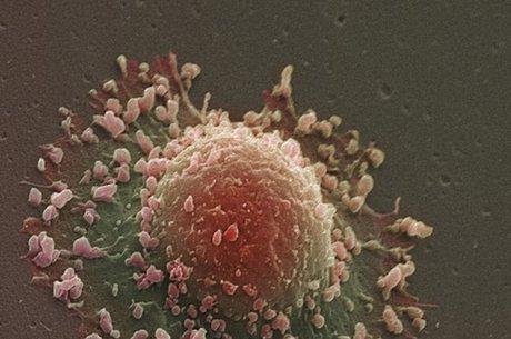 Descoberta sobre mutações ajudará em tratamentos