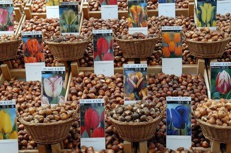 Bulbos de tulipa: a primeira bolha financeira da história