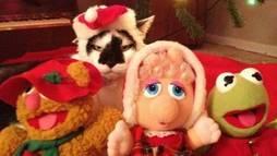 Hora 7 denuncia: esses bichos odeiam o Natal! A gente explica por quê! ()