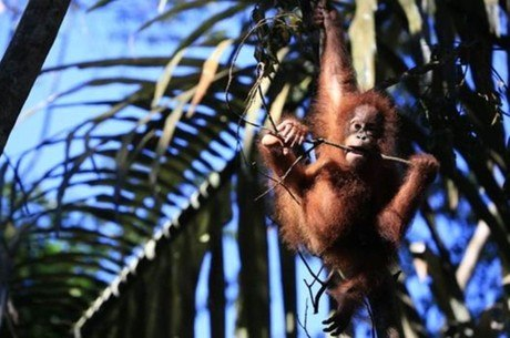 Luta pela preservação das florestas na Indonésia tem sido árdua