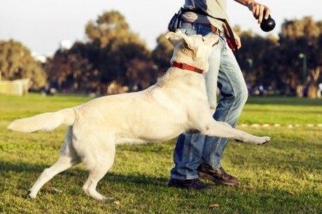 cão correndo atrás de dono