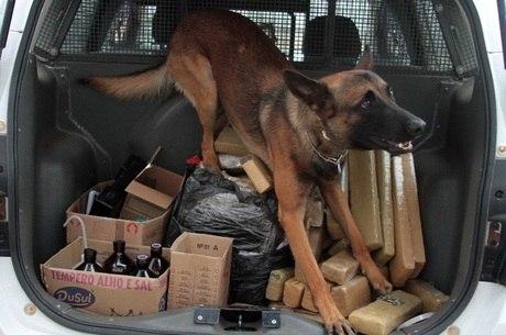 Na foto, cão da PM achou 70 tijolos de maconha em Campinas