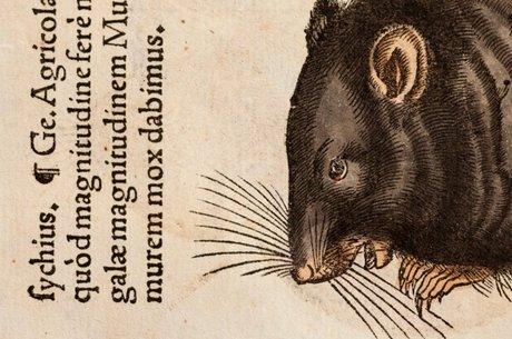 Ilustrador morreu pela peste bubônica em 1565