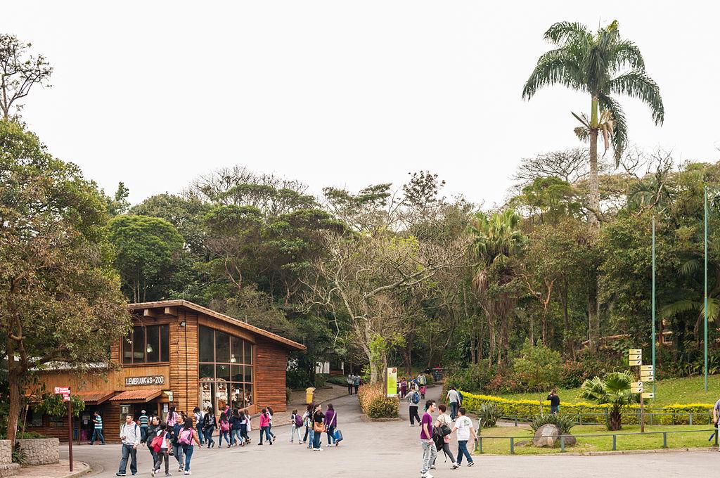 Morte de macaco faz Zoo e Jardim Botânico fecharem