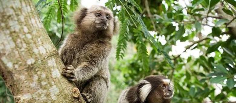 É bom lembrar que os primatas não são transmissores da doença, mas são indicadores do vírus