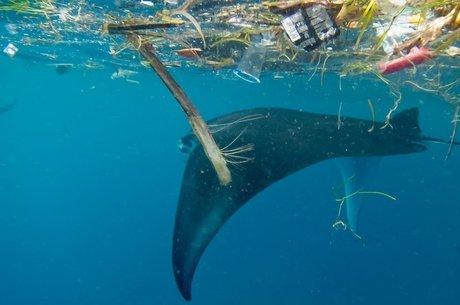 Pesquisadores sugerem estudos com espécies icônicas