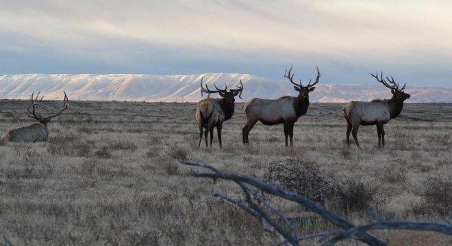 Ativistas afirmam que querem proteger também a natureza do sul do Estado de Washington